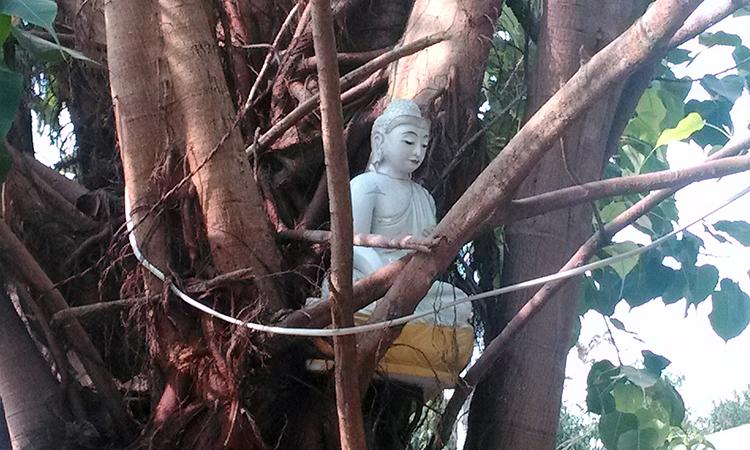 Statue de bouddha dans un arbre du monastère Shwe Oo Min Dhamma Sukha, un centre de retraite bouddhiste dans la tradition des moines de la forêt en Birmanie