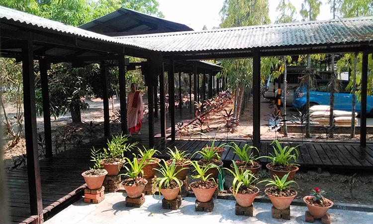 Les allées de bois sont couvertes et les plantes omniprésentes dans le centre de retraite Bouddhiste en Birmanie dirigé par U Tejaniya.