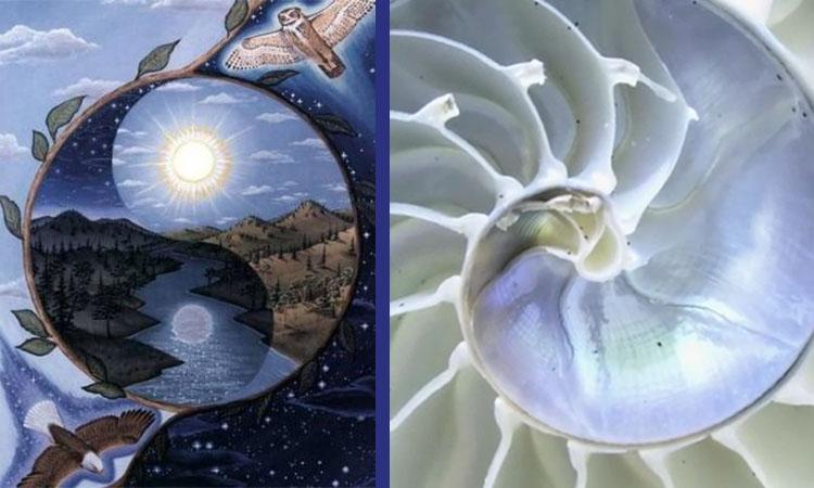 Biomimétisme et Le symbole du Yin et du Yang