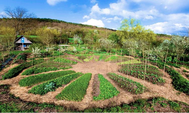 Récit d'un stage de permaculture réalisé dans le cadre de la création de l'écolieu - Un exemple avec la ferme du Bec Hellouin