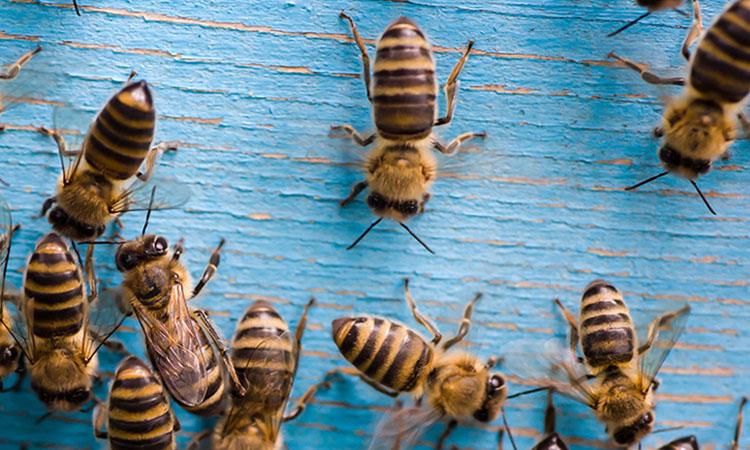 Récit d'un stage de permaculture réalisé dans le cadre de la création de l'écolieu - Nos amies les abeilles