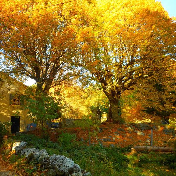 Cycle MBSR, stage et retraite de Méditation Pleine Conscience - Valence, Drôme