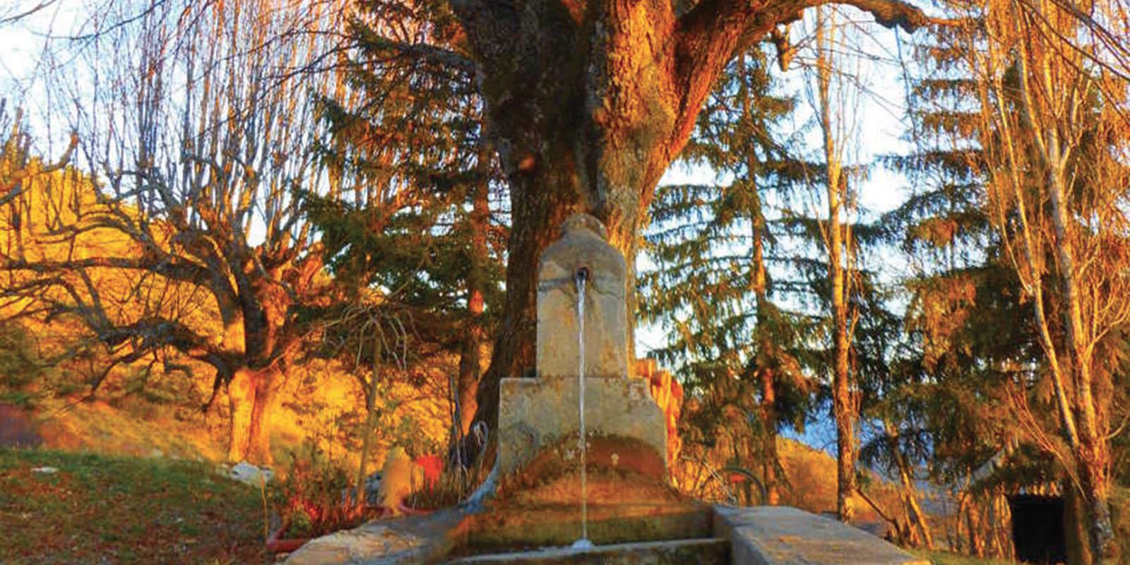 RETRAITE Méditation Pleine conscience & Nature