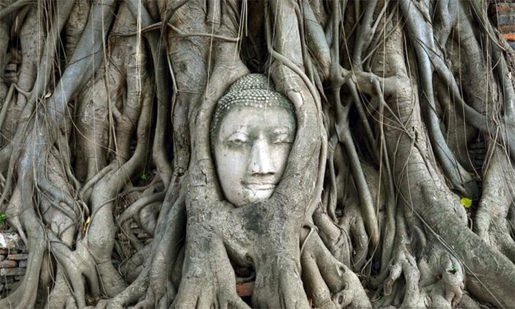 Tête de bouddha au sein de racines d'arbres. Comment relier l'écologie intérieure et la spiritualité ?